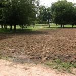 Tibin : le champ labouré a effacé le chemin menant au puit (au fond)